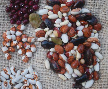 Planning a Seed-Saving Garden Workshop